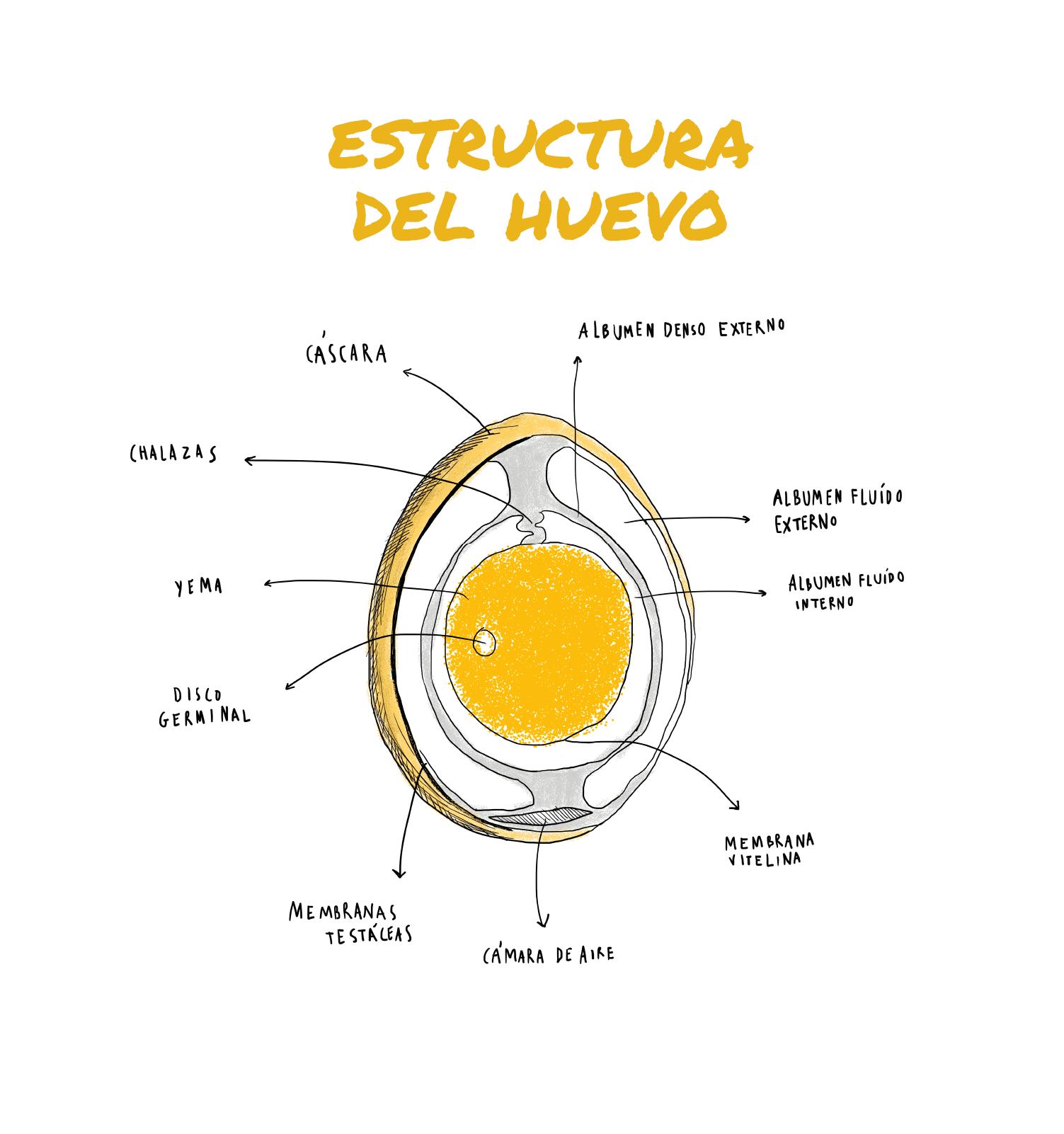 Estructura Instituto De Estudios Del Huevo